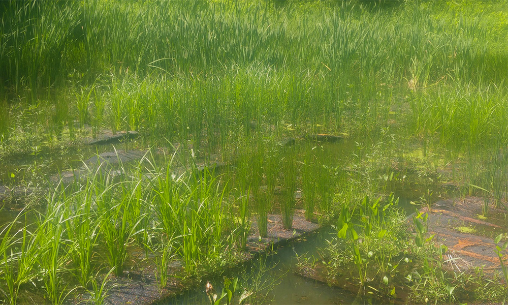 Floating treatment wetlands in stormwater pond