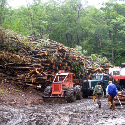Wood harvested to be used as fuel